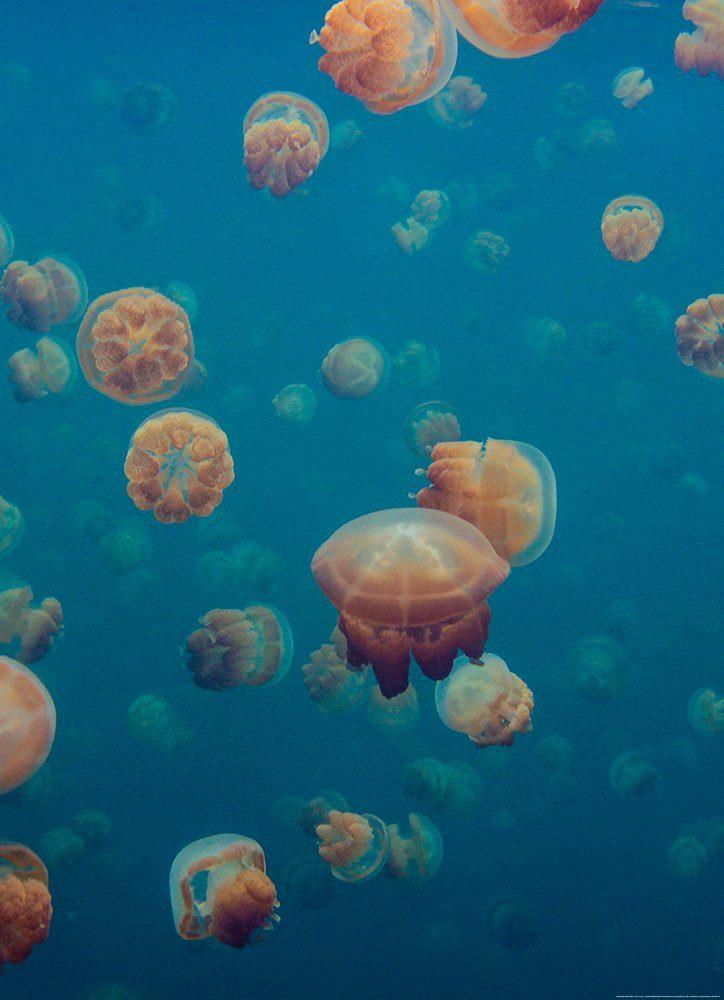 IDEALDECOR Fototapete »Quallen Unterwasser Meer«, BlueBack, 2 Bahnen, 183 x 254 cm