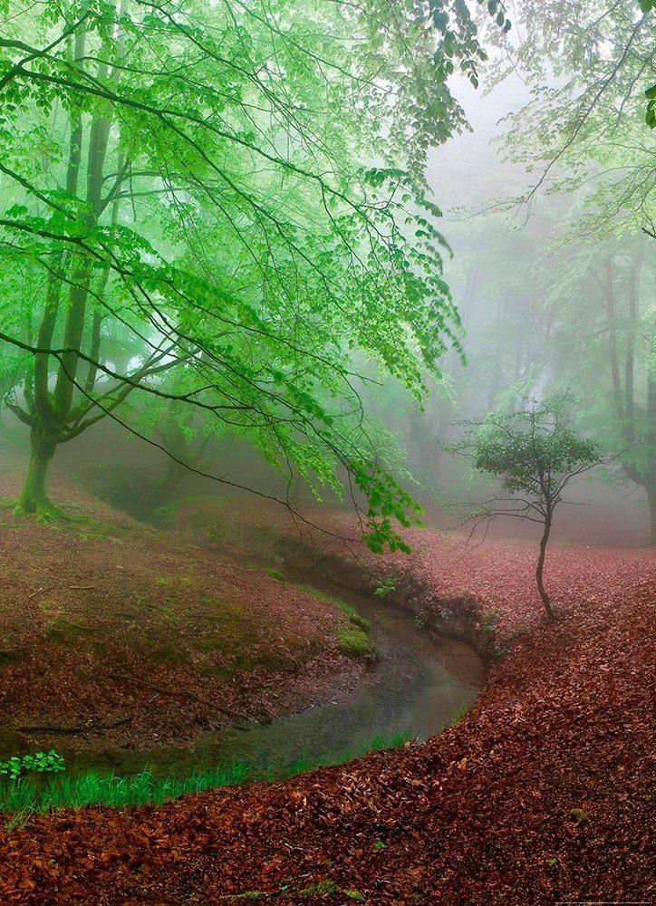 IDEALDECOR Fototapete »Nebeliger Wald«, Vlies, 2 Bahnen, 183 x 254 cm