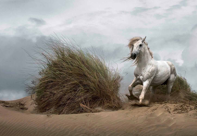 IDEALDECOR Fototapete »Weißes Wildpferd«, BlueBack, 4 Bahnen, 368 x 254 cm