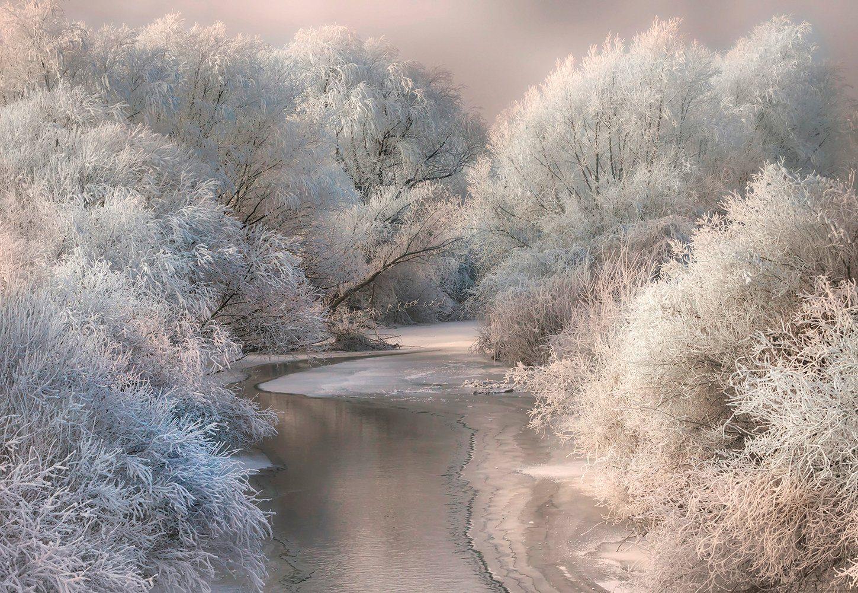 IDEALDECOR Fototapete »Gefrorener Wald«, Vlies, 4 Bahnen, 368 x 254 cm