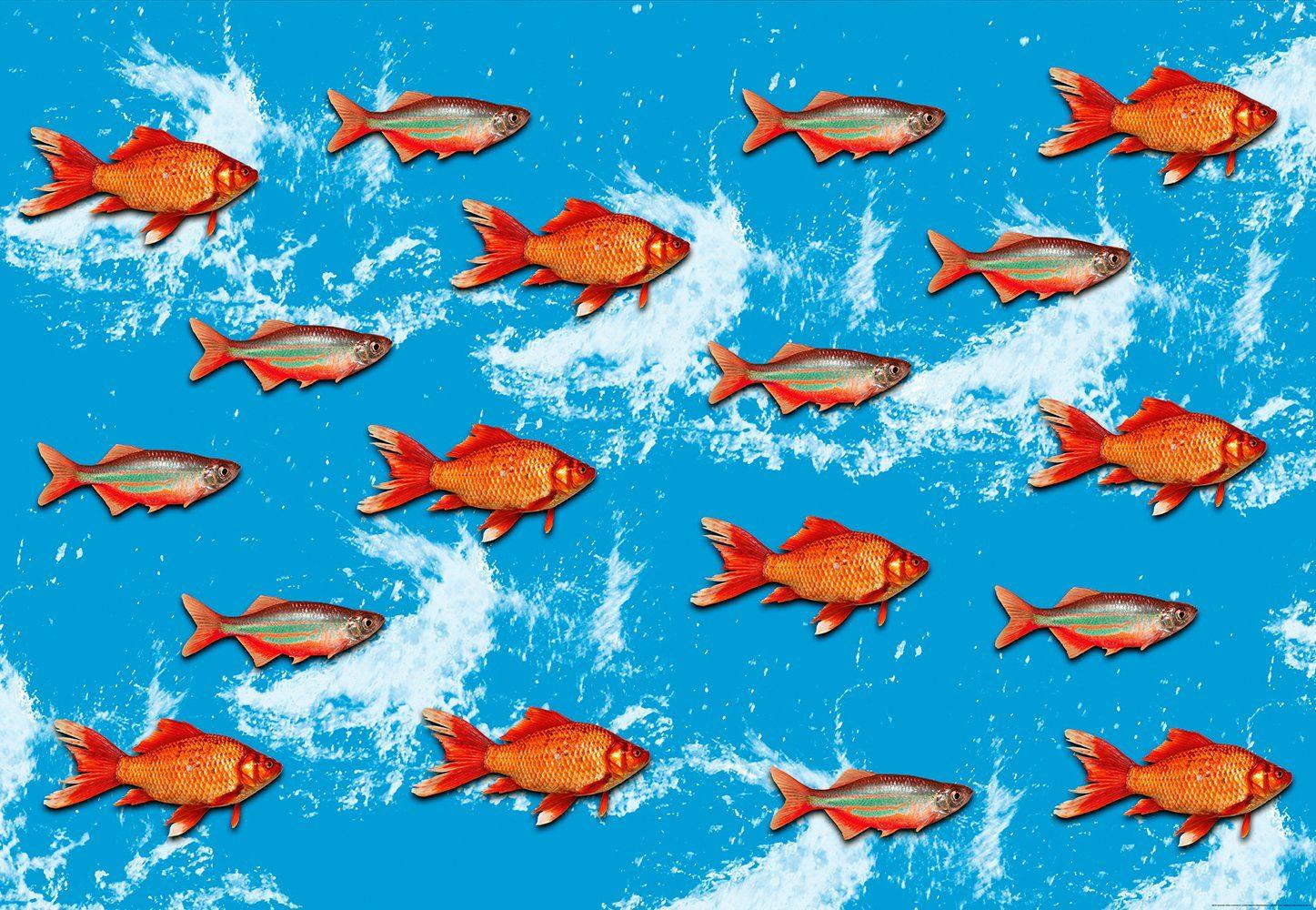 IDEALDECOR Fototapete »Goldfisch«, BlueBack, 4 Bahnen, 368 x 254 cm