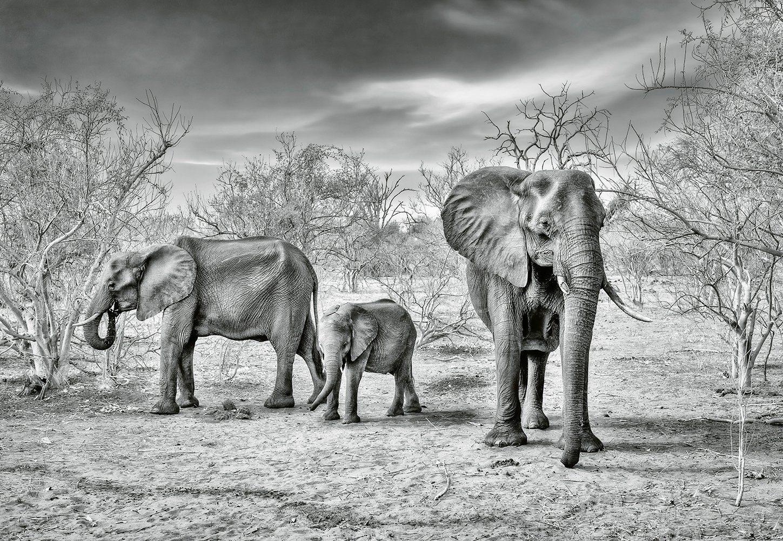 IDEALDECOR Fototapete »Elefantenfamilie«, Vlies, 4 Bahnen, 368 x 254 cm