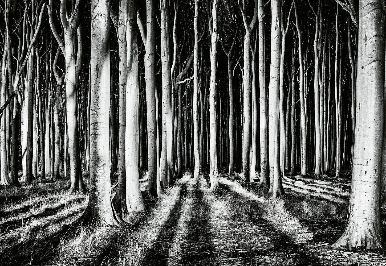IDEALDECOR Fototapete »Geisterwald«, Vlies, 4 Bahnen, 368 x 254 cm