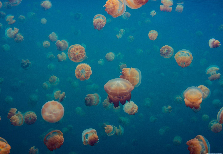 IDEALDECOR Fototapete »Quallen Unterwasser Meer«, Vlies, 4 Bahnen, 368 x 254 cm