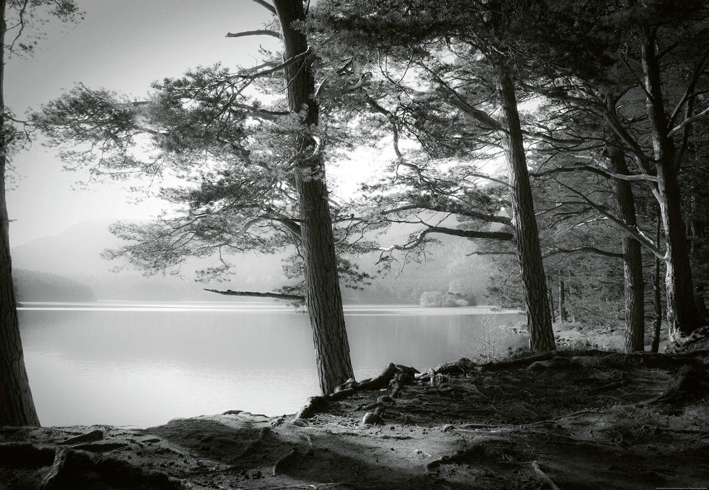 IDEALDECOR Fototapete »Waldsee«, Vlies, 4 Bahnen, 368 x 254 cm