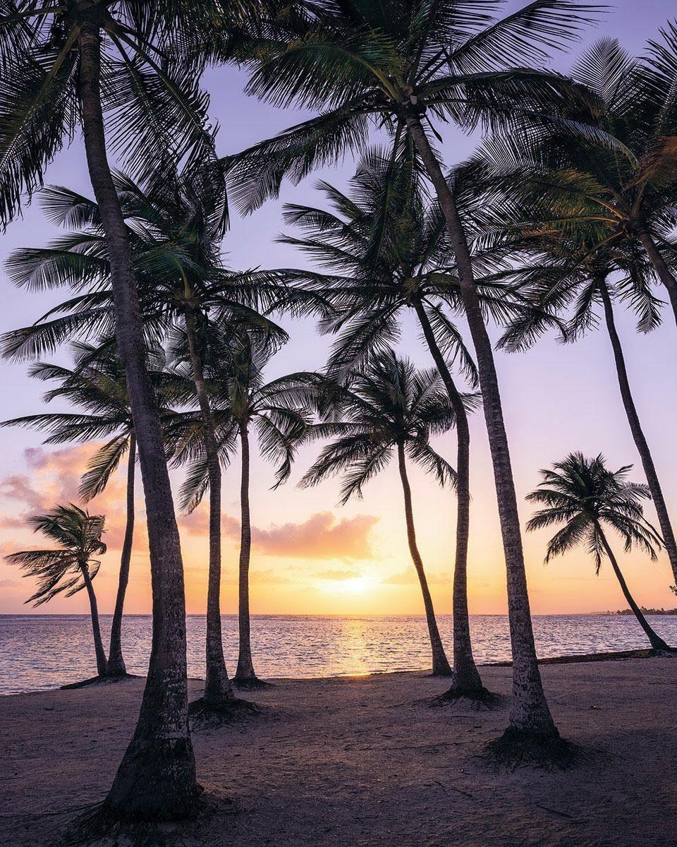 Komar Fototapete »Palmtrees on Beach«, 200/250 cm