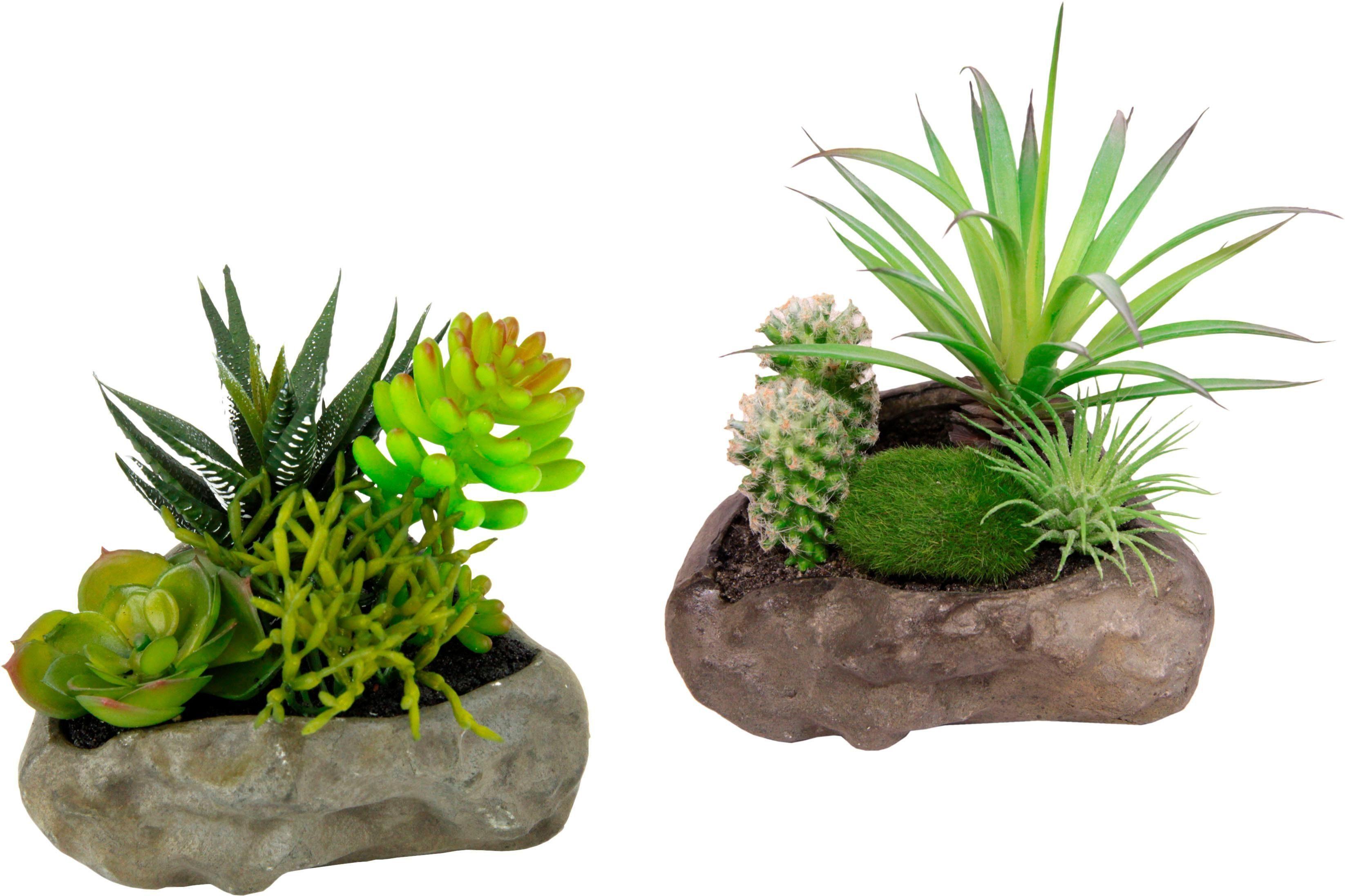 Kunstpflanzen Succulenten, auf Stein (2er Set)