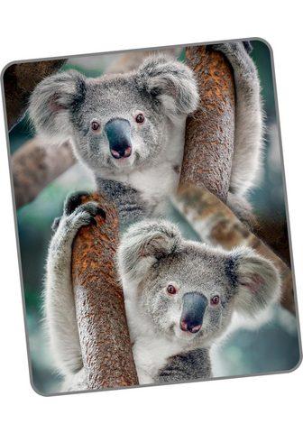 GOOD MORNING Užklotas »Koala«