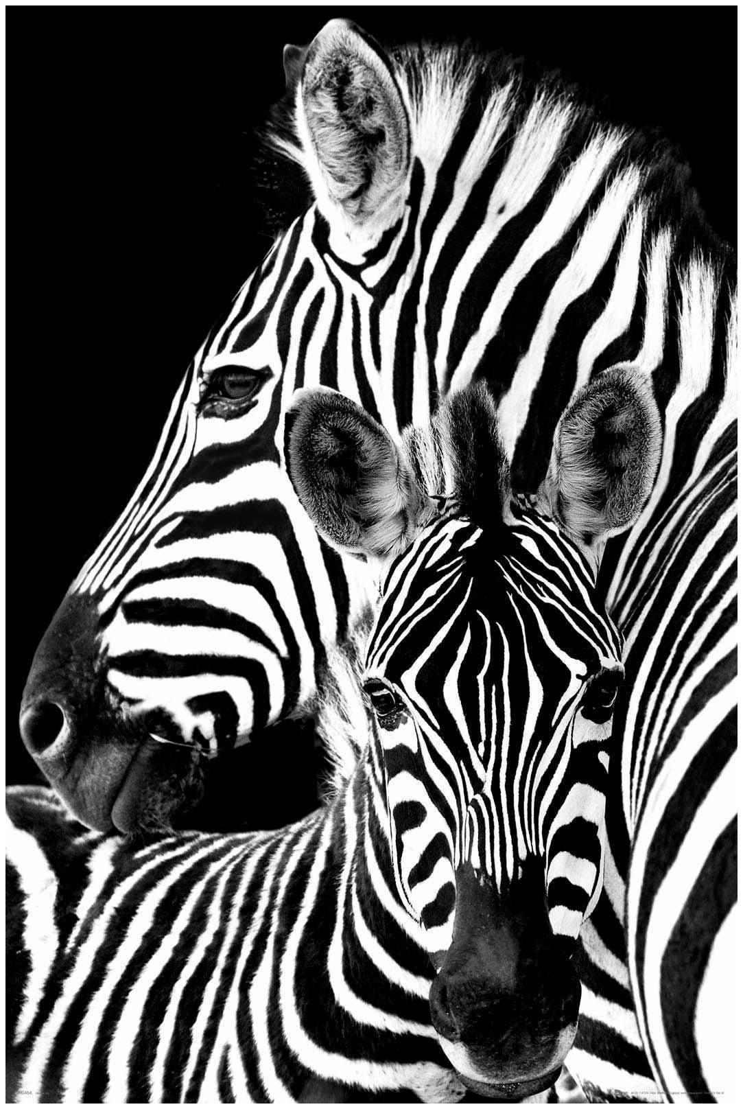 Deco-Panel »Zebra«, Tiermotiv, 60/90 cm