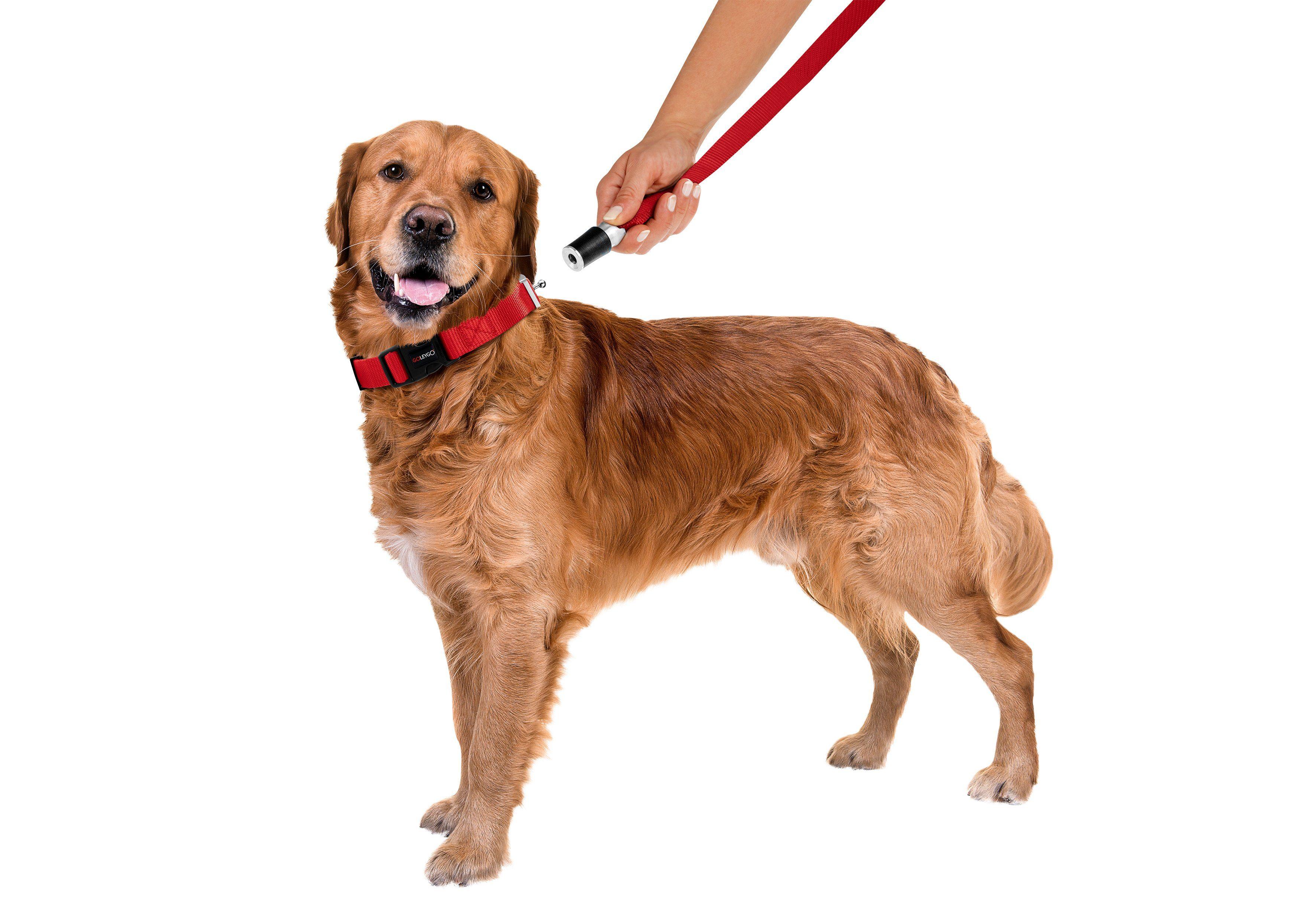 GOLEYGO Hundeleine und Halsband in Rot, L bis XL