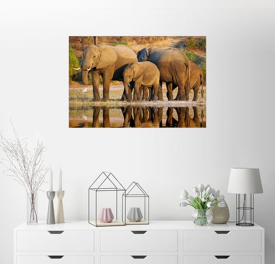 Posterlounge Wandbild - wiw »Elefanten am Fluss, Afrika wildlife«