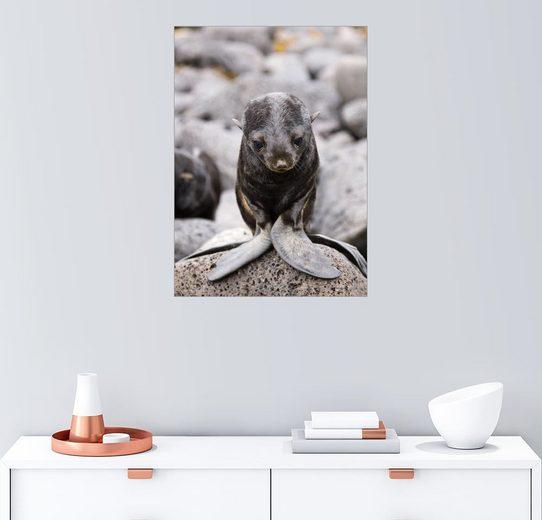 Posterlounge Wandbild - Alaska Stock »Kleiner Seebär«