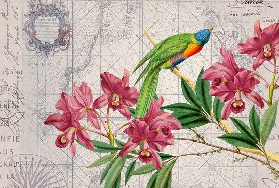 living walls Fototapete »ARTist Bird Discovery«, (Set, 4 St), Blumen Vögel Weltkarte, Vlies, glatt