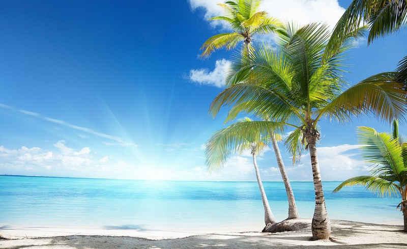 Consalnet Fototapete »Sonniger Strand mit Palme«, glatt, Strand