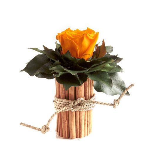 ROSEMARIE SCHULZ Heidelberg Dekoobjekt »Blumenstrauß im Zimtbecher infinity Rosen konserviert haltbar 3 Jahre«, Infinity Rosen