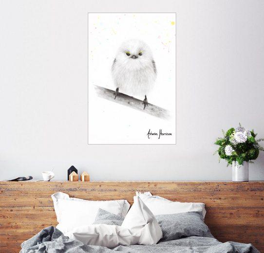 Posterlounge Wandbild, Kleine Schwanzmeise