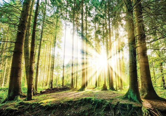 Consalnet Fototapete »Sonniger Wald«, glatt, Motiv