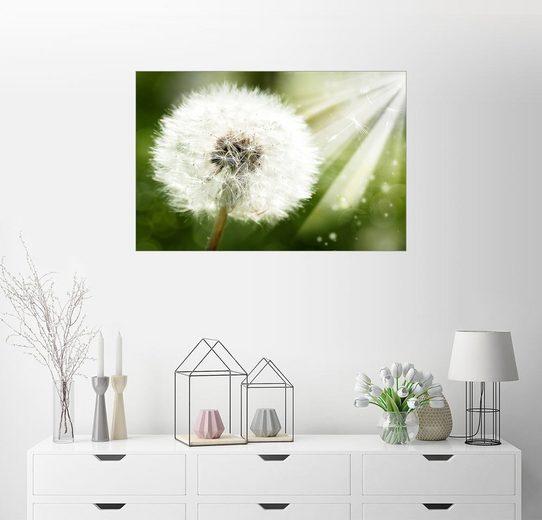 Posterlounge Wandbild, Löwenzahn-Blume im Sonnenlicht