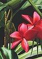 Aniston by BAUR Schlupfhose mit Tropical Print, Bild 8