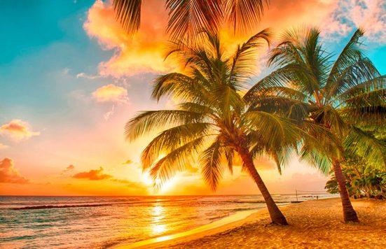 Papermoon Fototapete »Barbados Palm Beach«, matt, (5 St), Vlies, 5 Bahnen, 250 x 180 cm