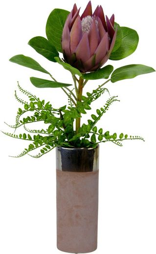 Kunstpflanze Protea, I.GE.A., Höhe 56 cm