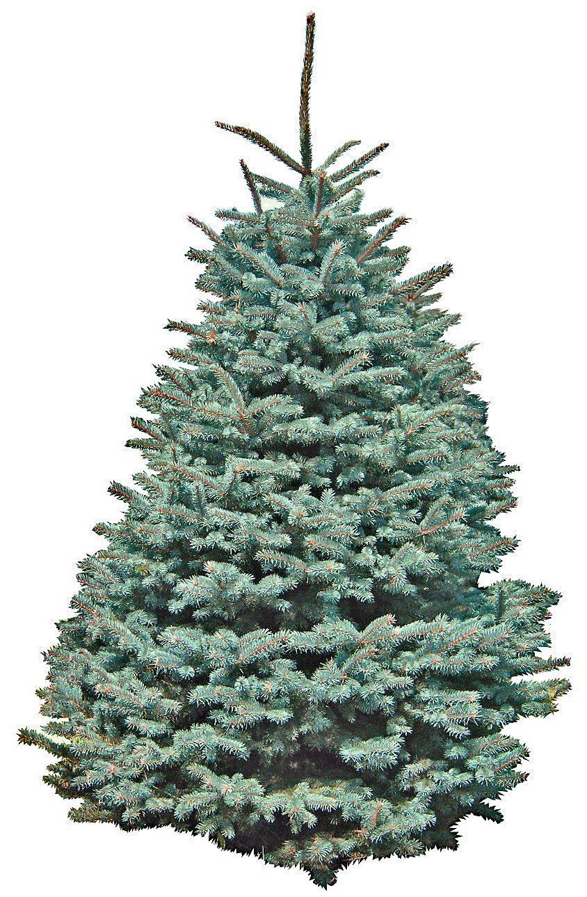 Weihnachtsbaum »Edeltanne«, frisch geschlagen, Höhe: 130-150 cm
