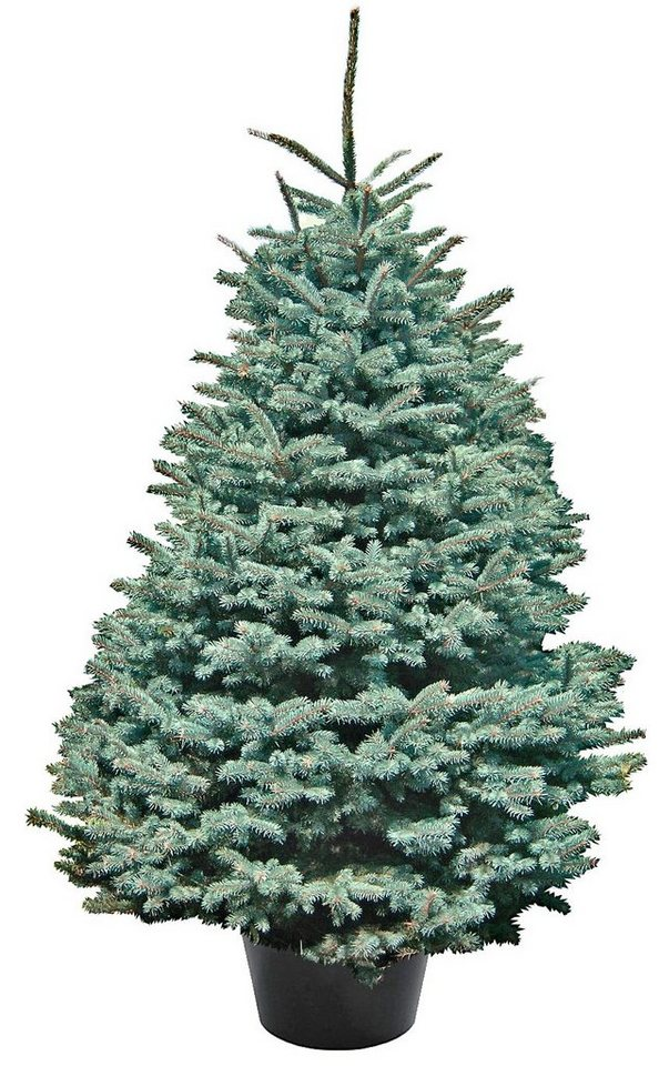 weihnachtsbaum edeltanne getopft h he 100 110 cm. Black Bedroom Furniture Sets. Home Design Ideas