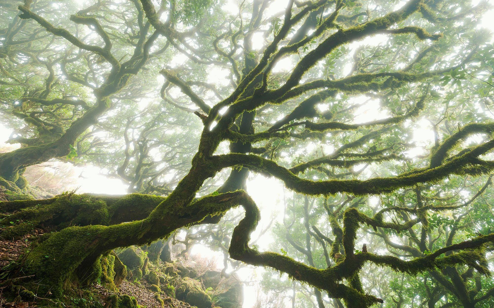 Komar Vlies Fototapete »The Forgotten Forest«, 400/250 cm