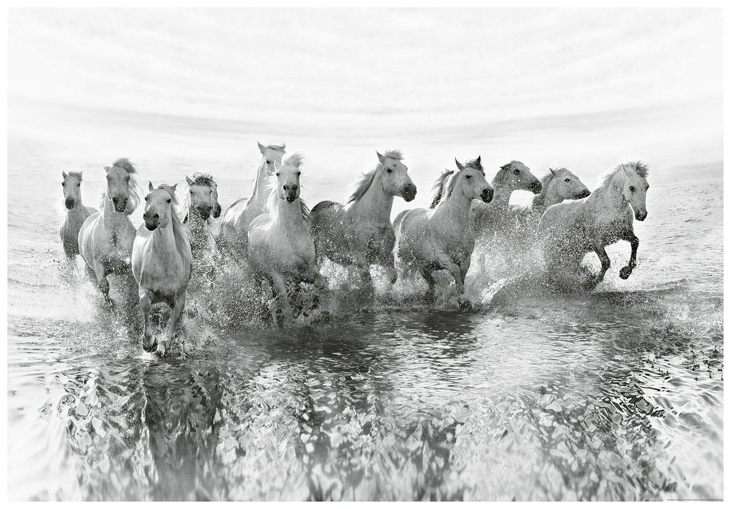 IDEALDECOR Fototapete »Weiße Pferde«, BlueBack, 4 Bahnen, 368 x 254 cm