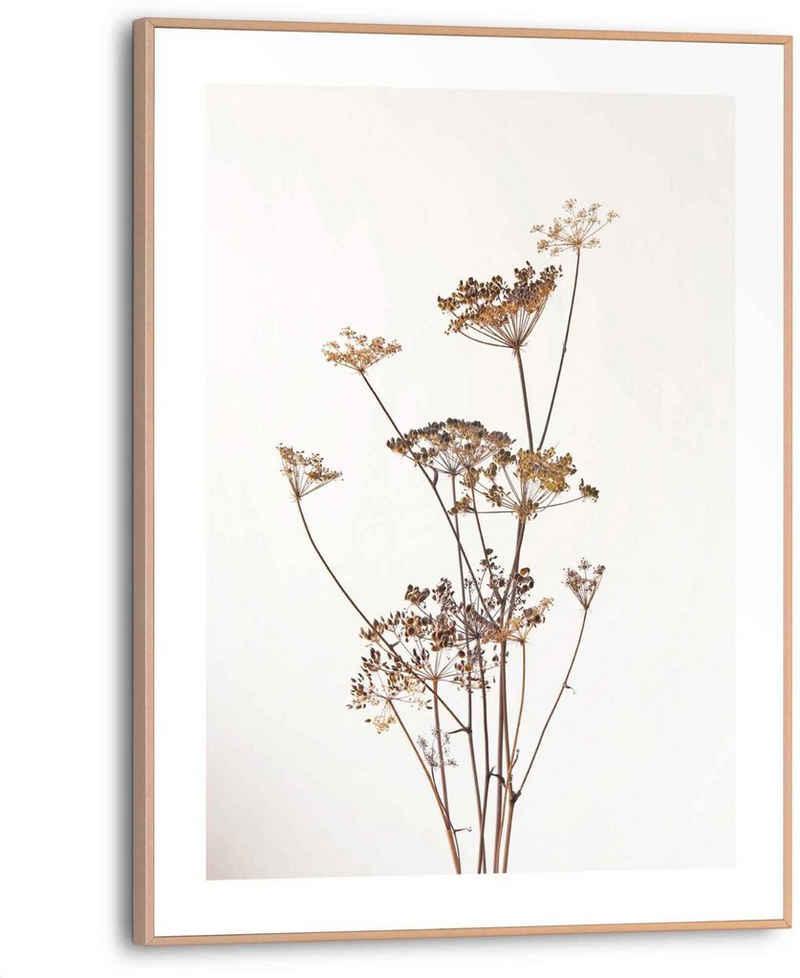 Reinders! Bild »Bärenklau Pflanz - Natur - Getrocknete Blume«, (1 Stück)