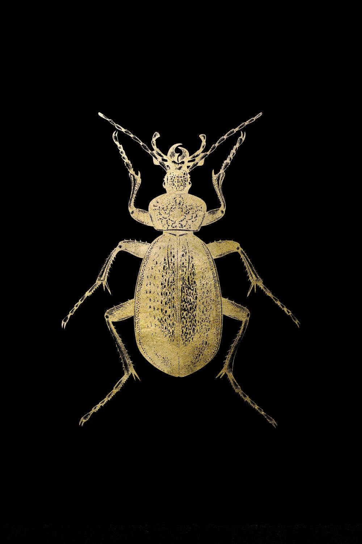 Leonique Acrylglasbild »Käfer«