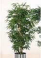 Schneider Kunstpflanze »Bambusbaum«, Bild 1
