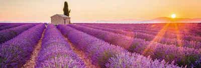 Home affaire Deco-Panel »Lavendel Horizont«