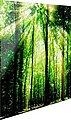 Glasbild »Grünes Licht«, Bild 1