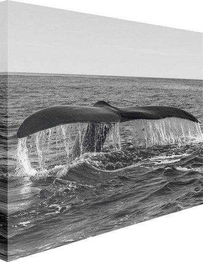 Leinwandbild »Walflosse«