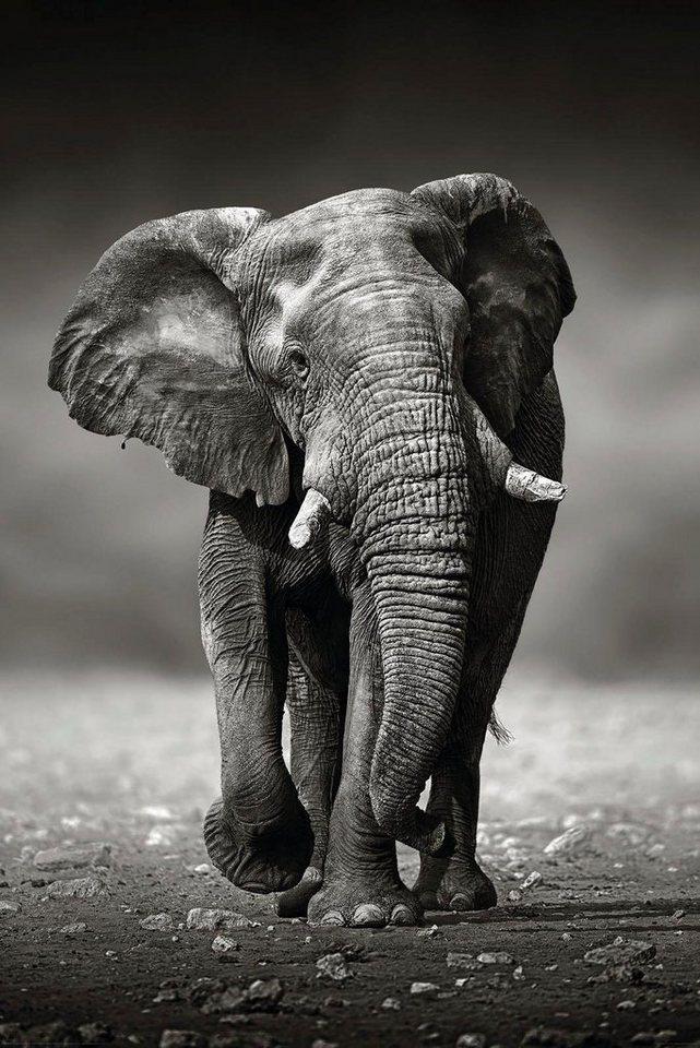 Farbe Mit Elefant