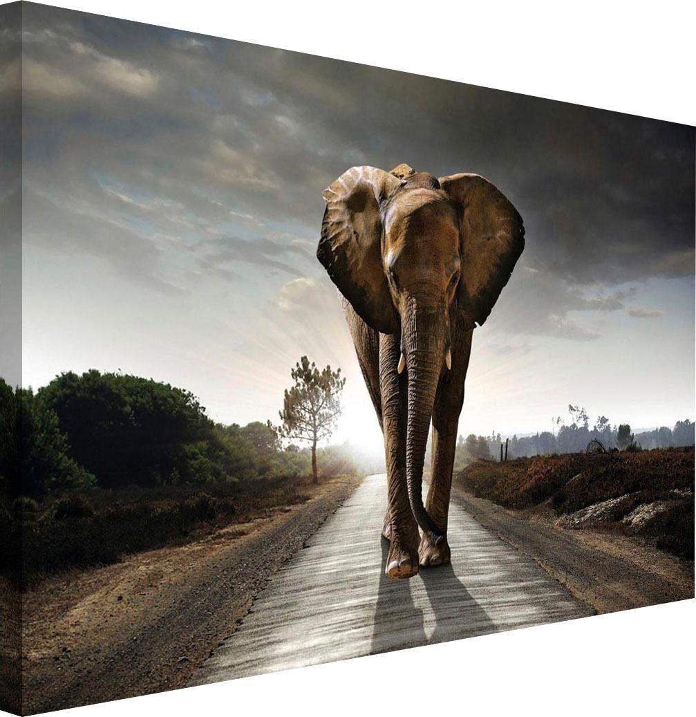 Holzbild »Elefant König«, 118/70 cm