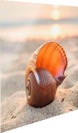 Glasbild »Muschelleuchten«