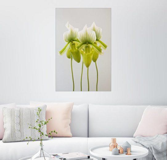 Posterlounge Wandbild, Premium-Poster Paphiopedilum maudiae Femma Orchidee