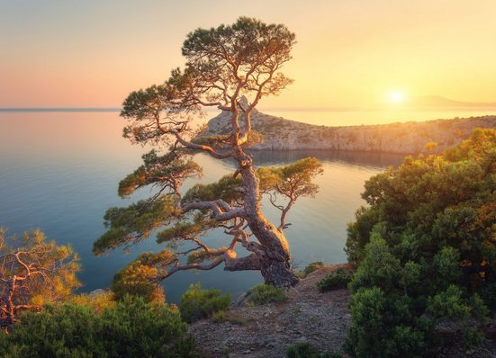 Fototapete »Tree Mountain Sunset«, glatt