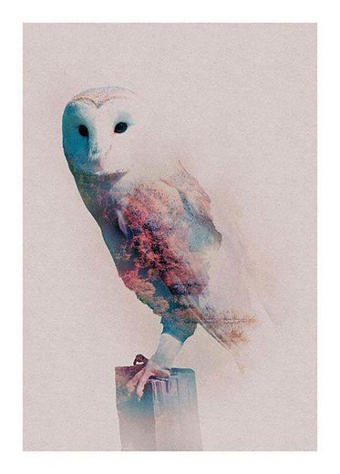 Komar Poster »Animals Forest Owl«