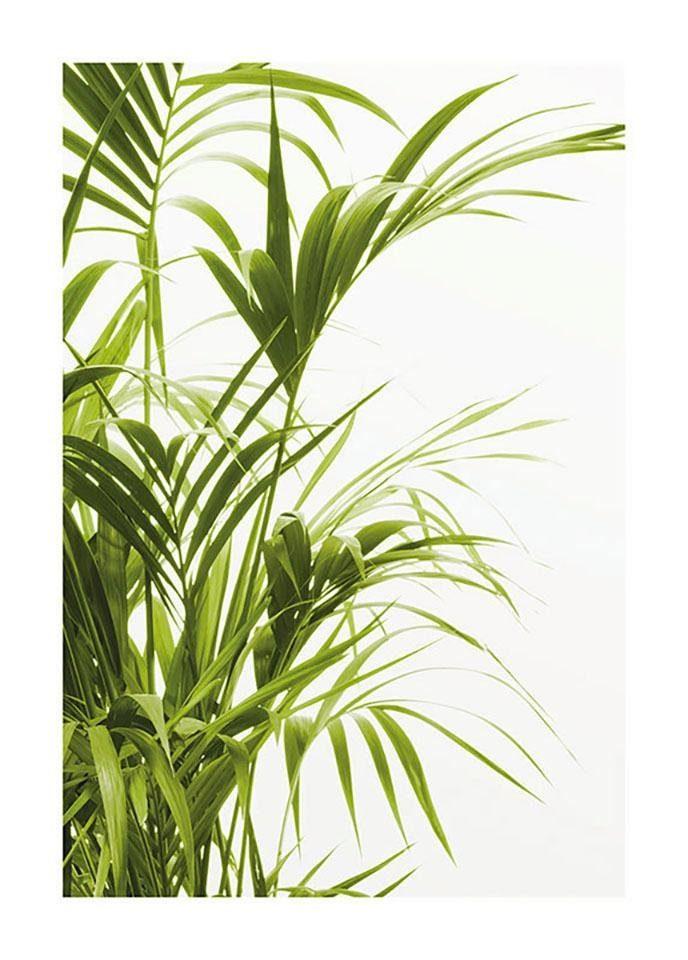 Komar Poster »Reed Leaves«