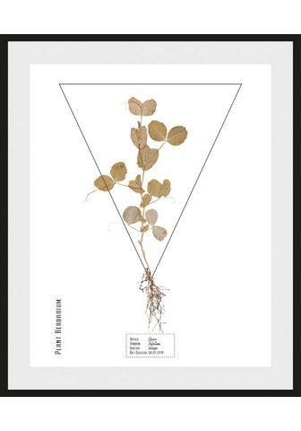 ANDAS Paveikslas »Pflanze«