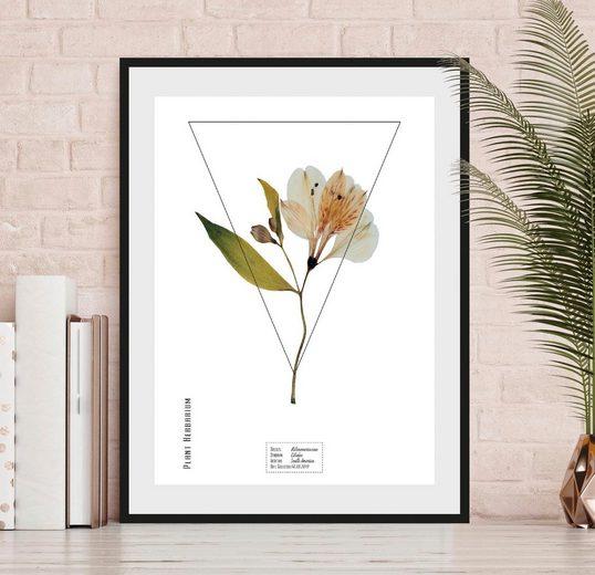 andas Bild »Pflanze Alstromerieae«, mit Rahmen