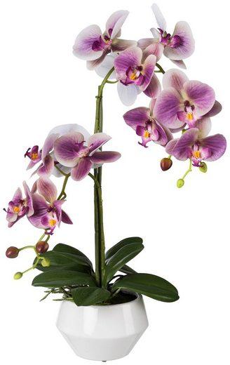 Kunstpflanze »Orchidee Phalaenopsis«, im Keramiktopf, Ø: 52 cm