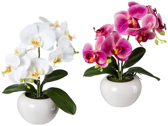 Kunstpflanze »Orchidee Phalaenopsis«, 2er Set im Keramiktopf, H: 35 cm