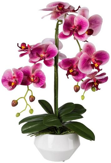 Kunstpflanze »Orchidee Phalaenopsis«, im Keramiktopf, H: 52 cm