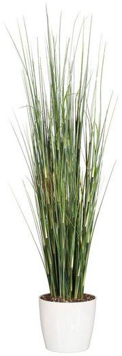 Kunstpflanze »Equisetumgras mit Blüten«, im Kunststofftopf, H: 95 cm