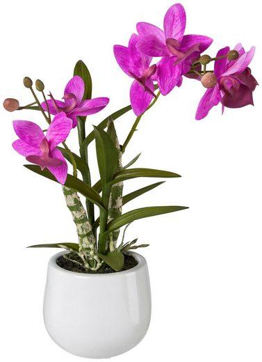 Kunstpflanze »Japanorchidee«, im Keramiktopf, H: 40 cm