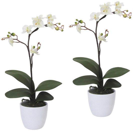 Kunstpflanze »Orchidee Phalaenopsis«, 2er Set im Keramiktopf, H: 55 cm